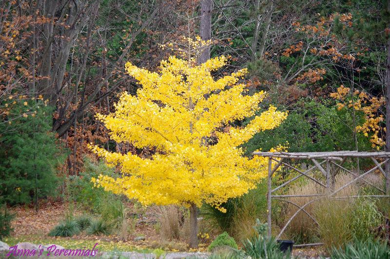 Specialty Trees for sale-buy from a local grower