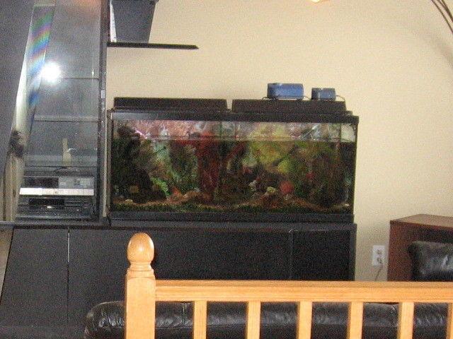 50 Us Gallon Aquarium