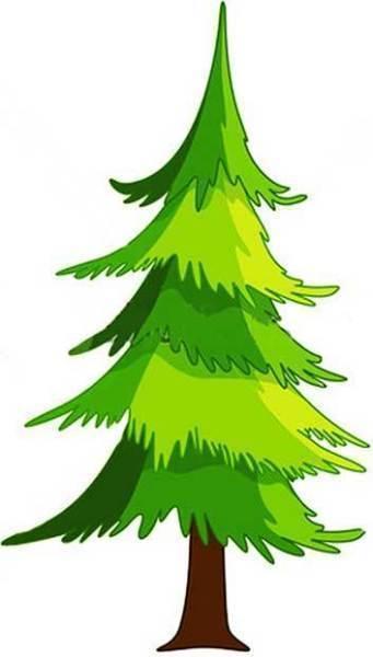 Summer Spruce Sale