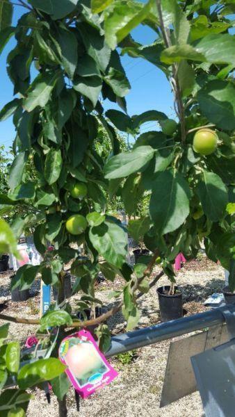 Fruit Trees!20% OFF SALE!