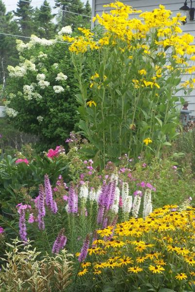ALL PLANTS on SALE - Perennials & More- $ 1.00 & up | 25-75% OFF
