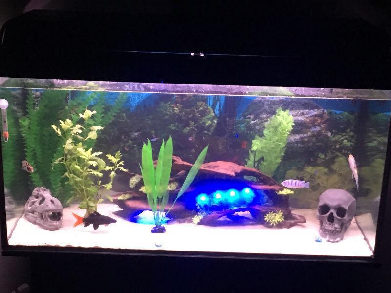 Aquarium set up