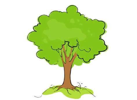 Okanese Hybrid Poplar Trees For Sale