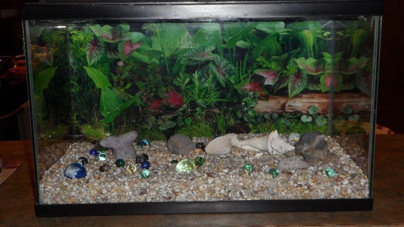 Fish Tankand Accessories
